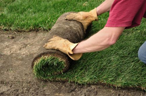 Lawn Sodding Service